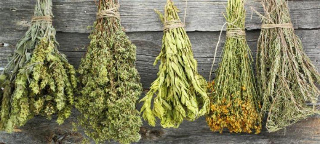 Kotinos Greek herbs - pegasusimportsexports